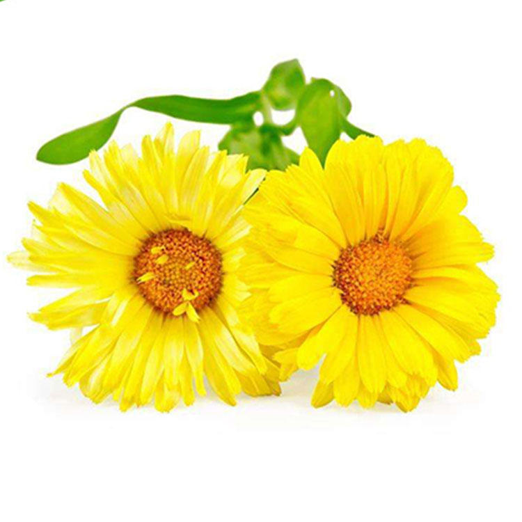 Natural Skincare Marigold Extract Lutein Powder