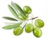橄榄叶.png