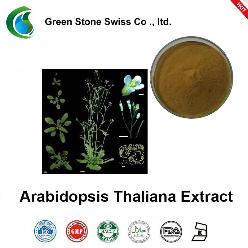 Best Herbal Extracts Arabidopsis Thaliana Extract
