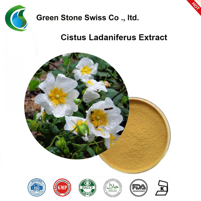 Cistus Ladaniferus Extract Powder Pure Herbal Extracts