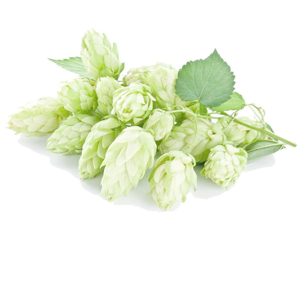 Hops Extract Greens Powder