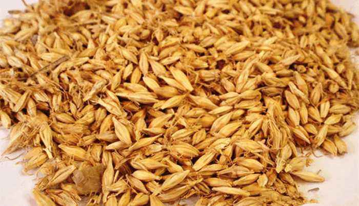 Barley Malt Extract Powder Fermented Plant Extract