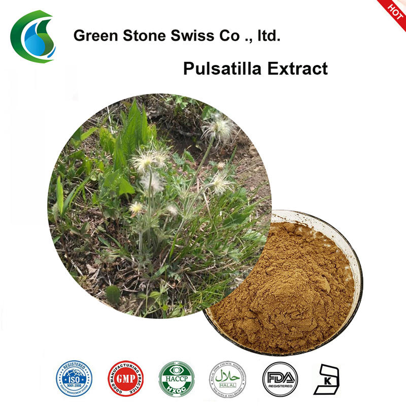Chinese Pulsatilla Root Extract Pure Herbal Extracts