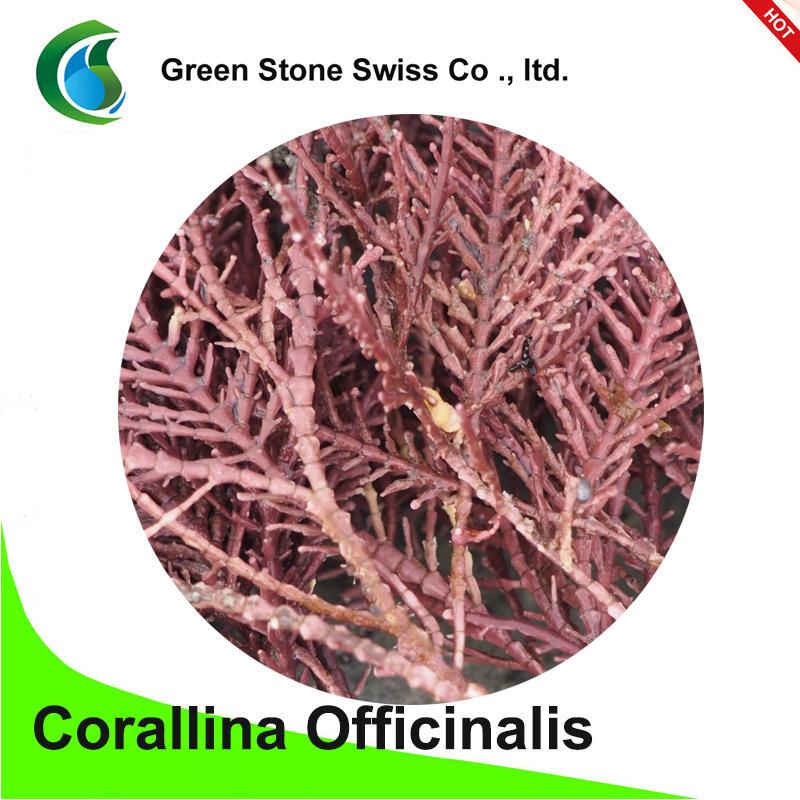 Corallina officinalis