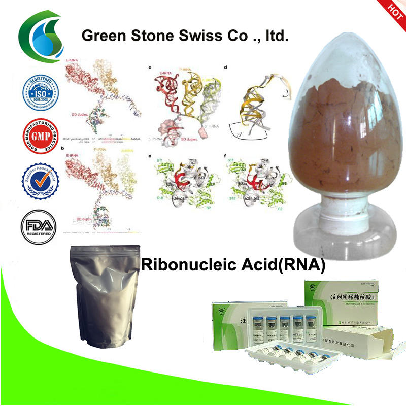 Ribonucleic Acid(RNA)
