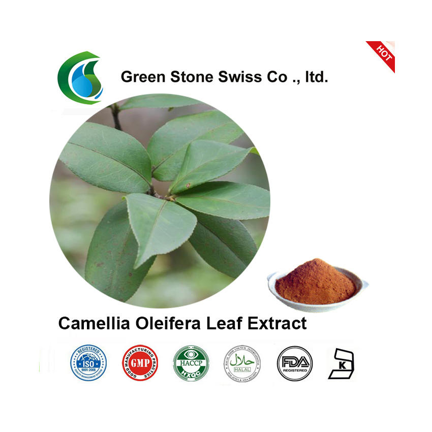 Camellia Oleifera Leaf Extract